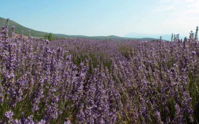 Mor Rüyadan Mavi Sulara; Isparta – Burdur