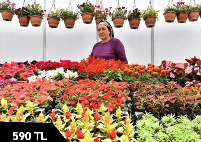 Bayindir Çiçek Festivali ve Ege Köyleri Turu